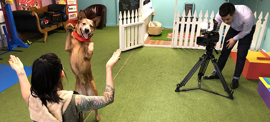 Dog doing trick being filmed by a student
